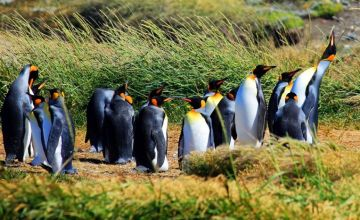 Punta Arenas and surroundings Tours